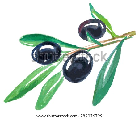 Watercolor illustration on a white background branch of black olives