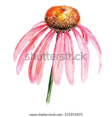 Watercolor image of flower of pink echinacea. Vector eps8 - stock vector