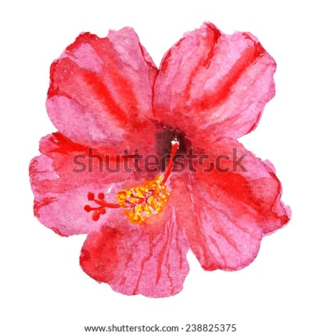 Watercolor image of flower of red hibiscus. Vector eps8 - stock vector