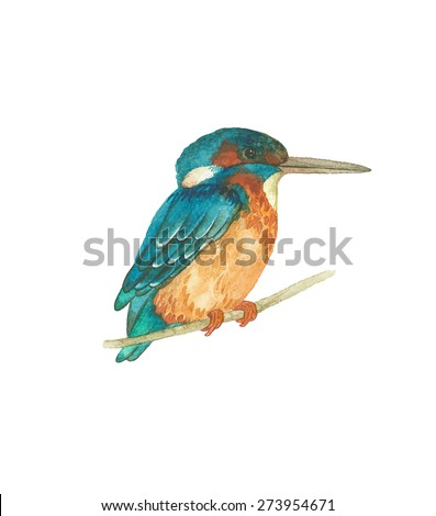 Watercolor Kingfisher bird (Alcedo atthis), vector illustration. - stock vector