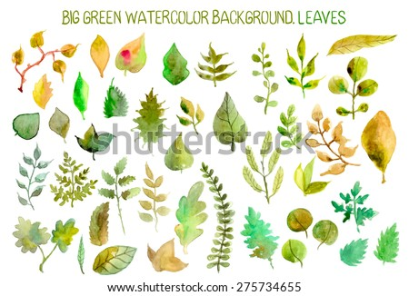 Watercolor leaves collection for different design, Vector - stock vector