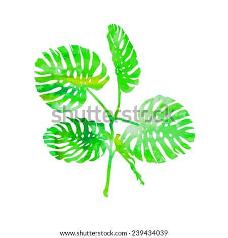 watercolor monstera leaf. Vector  - stock vector