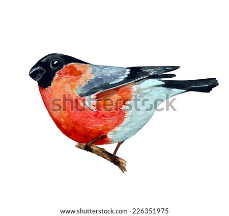 watercolor painting bullfinch on branch. vector illustration - stock vector