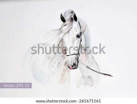 watercolor painting of andalusian horse portrait. Vector, EPS 10 - stock vector