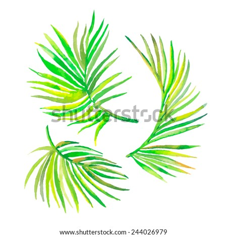 Watercolor palm leaves isolated on white.Vector for your design. - stock vector