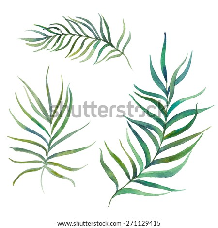 Watercolor palm tree leaves set. Isolated hand drawn botanical elements in vector.  - stock vector