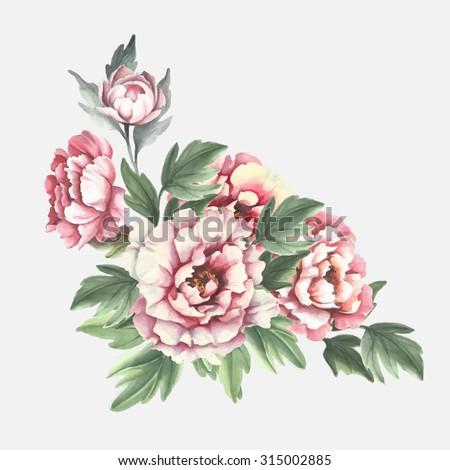 Watercolor peonies. Vector illustration - stock vector