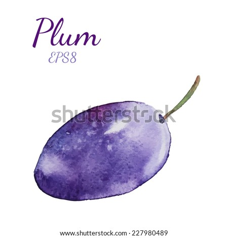 Watercolor Plum. Hand drawn natural isolated object. Vector illustration. - stock vector