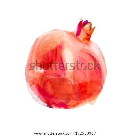 watercolor pomegranate - stock vector