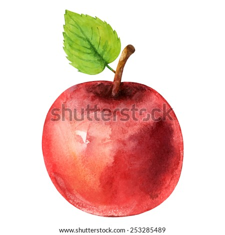 Watercolor red apple fruit whole with leaf closeup isolated on white background - stock vector