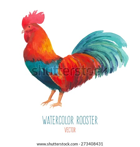 Watercolor rooster. Hand drawn isolated illustration of single chicken bird. Vector - stock vector