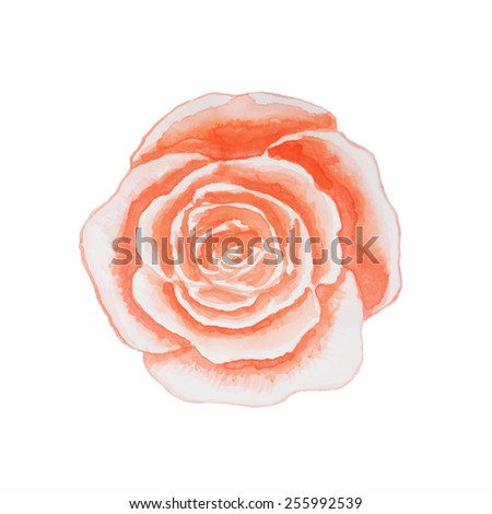 Watercolor rose isolated on white background. Vector illustration, hand drawn. - stock vector