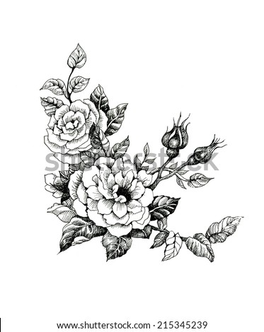 Watercolor roses flowers illustration in black and white vector illustration