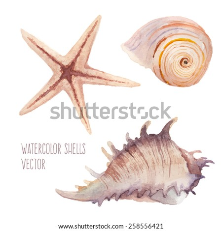 Watercolor sea shells set. Hand painted artistic objects isolated on white background. Natural summer clip art in vector - stock vector