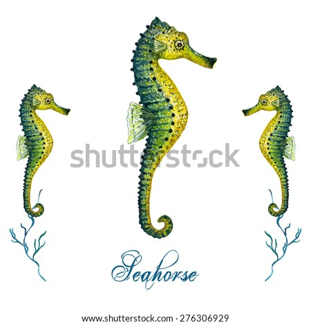 Watercolor Seahorse isolated on white background. Tropical fish card, postcard & invitation. Elegant concept for Aquarium, Swimming Lessons, Diving courses & Eco Tourism. Element for your design.  - stock vector