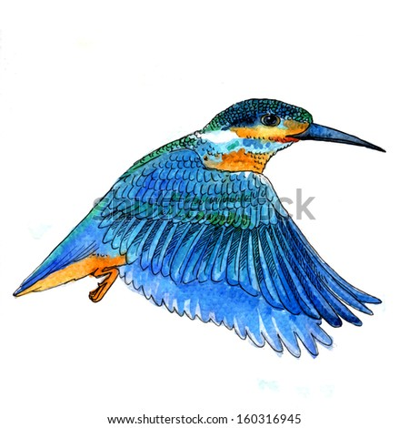 Watercolor-style vector illustration of Bird Kingfisher bird on white background. - stock vector