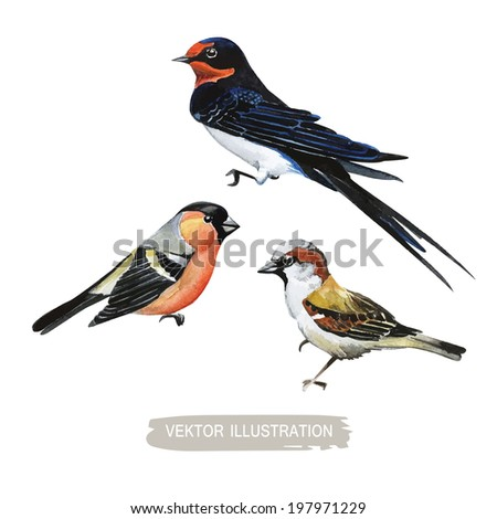Watercolor-style vector set of birds.Titmouse Sparrow Swallow on white background. - stock vector