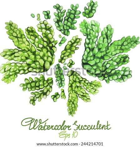 Watercolor succulent. Vector illustration - stock vector