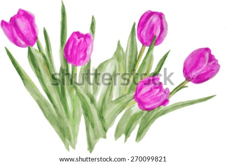 Watercolor tulips on a white background - stock vector