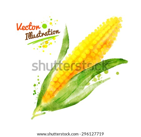 Watercolor vector drawing of corn with paint splashes. - stock vector