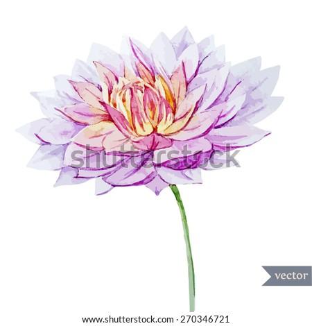 watercolor, vector, flower, dahlia, plant, botany, summer, spring - stock vector