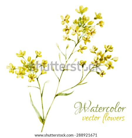 watercolor vector illustration of yellow flowers, isolated object, card - stock vector