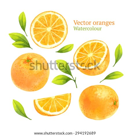 Watercolor vector oranges