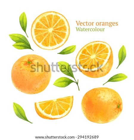 Watercolor vector oranges - stock vector