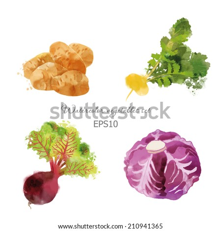 watercolor vector vegetables set with potato, beet, red cabbage and turnip  - stock vector