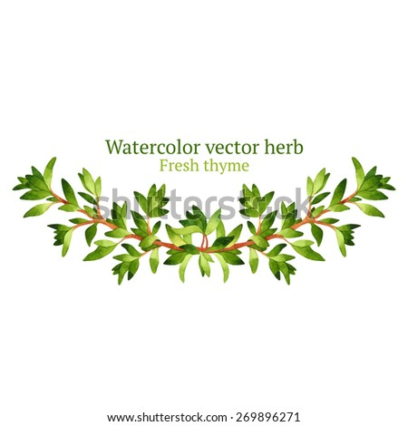 Watercolor vector vignette with thyme
