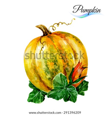 Watercolor vegetables pumpkin isolated on white background - stock vector