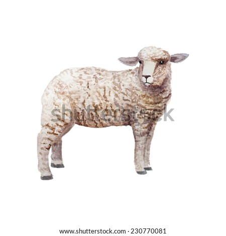 Watercolor vintage lamb standing. Hand drawn farm animal illustration in vector. Isolated on white background. - stock vector
