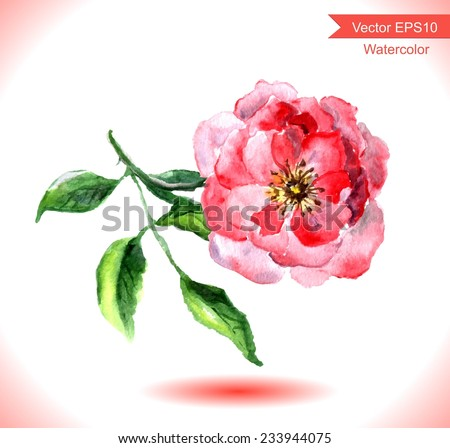 Watercolor wild rose flower. Botanical illustration - stock vector