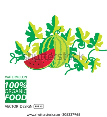 Watermelon, fruits vector illustration. - stock vector
