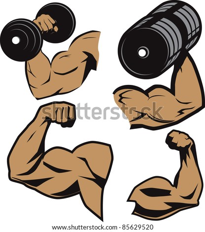 Weightlifter Arms - stock vector