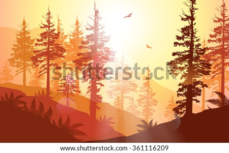 West Coast forest in warm sunlight - stock vector