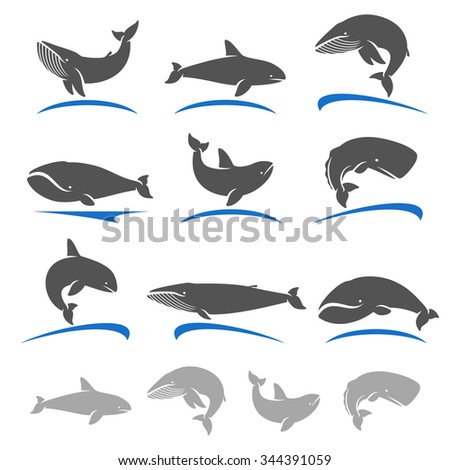 Whale set. Vector - stock vector