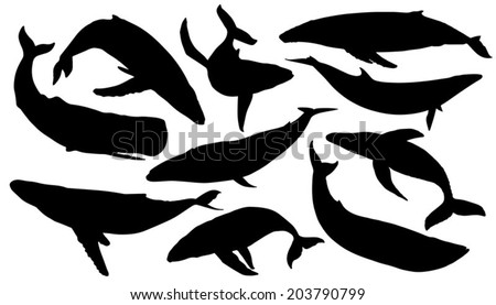 whale silhouettes on the white background - stock vector