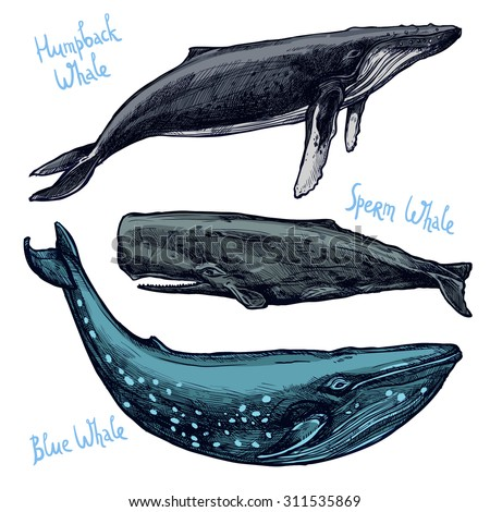 Whales Set, Collection Of Different Color Hand Drawn Whales - stock vector