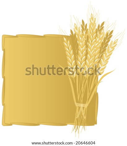 Wheat Background Vector. - stock vector