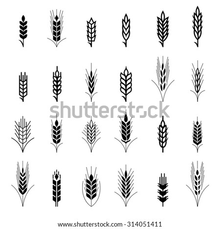 Wheat ear symbols for logo design. Agriculture grain, organic plant, bread food, natural harvest, vector illustration - stock vector