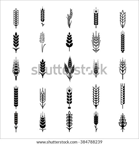 Wheat Ears Icons and Logo Set.  For Identity Style of Natural Product Company and Farm Company.  Organic wheat, bread agriculture and natural eat. Contour lines. Flat design.  Realistic image. Vector  - stock vector