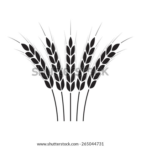 Wheat ears or rice icon. Crop symbol on white background. Design element for bread packaging or beer label. Vector illustration. - stock vector