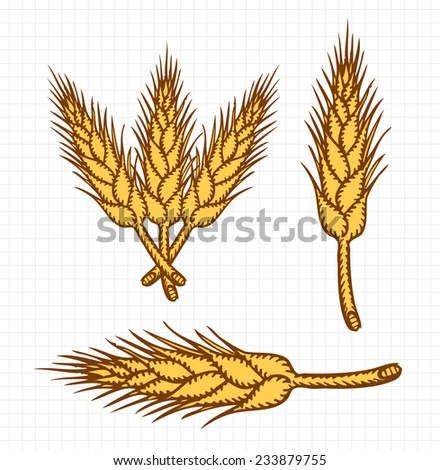 Wheat Etching, Free Hand Sketch, Colored Outlines - stock vector