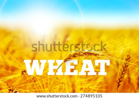 Wheat field - stock vector