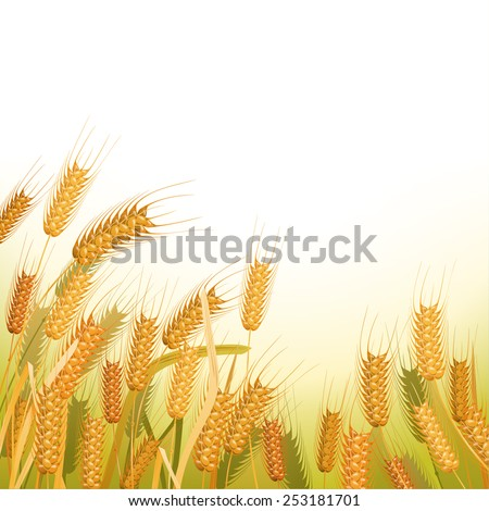 Wheat field with place for your text - stock vector