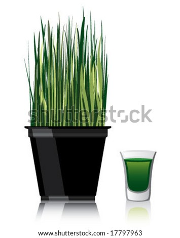 Wheat Grass and a shot of juice