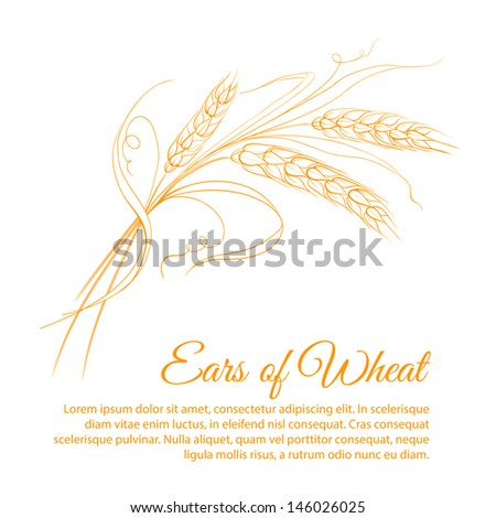 Wheat isolated on white. Vector illustration. - stock vector