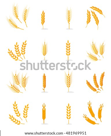 Wheat, rye and barley isolated on white background. Vector wheat. Grain vector isolated. Harvest. Organic food. Farmers product. Agriculture product. Wheat vector. Design elements for bread packaging.