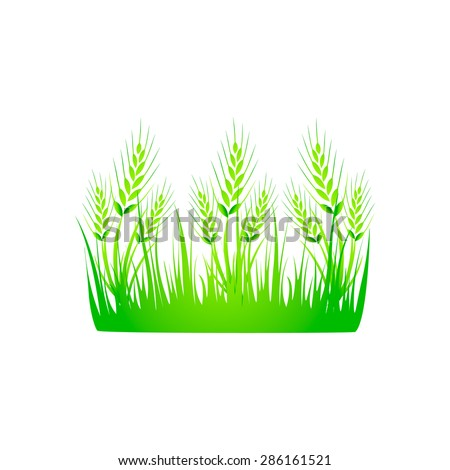 Wheat, wheat grass green juice. Logo, banner, frame for business, the store site for clean super food or paleodieta on a white background. Vector illustration - stock vector